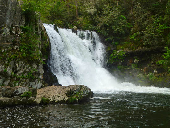 Abrams Falls is just one of several highlights on the Abrams Falls - Rabbit Creek Loop